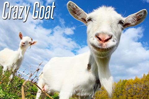 Download Crazy goat iPhone free game.