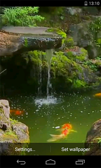 Pond with koi live wallpaper for android pond with koi for Koi fish pond live wallpaper